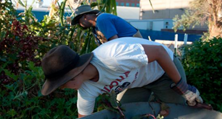 Photograph of students working in the garden